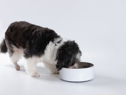 Sublimation 64oz/1900ml Stainless Steel Dog Bowl (White)